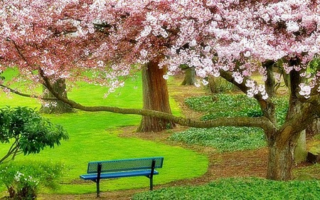 Blossom trees - beauty, flowers, nature