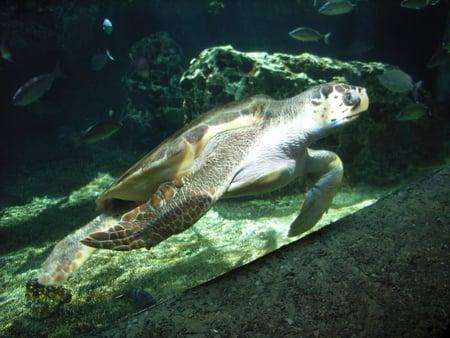 Beautiful - swimming, underwater, turtle