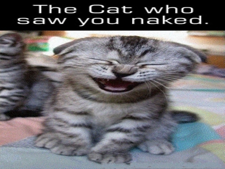 The cat who saw you naked