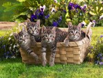 A basket of Curious Kittens