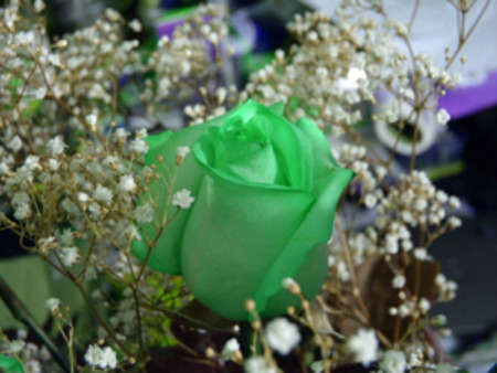 Green Rose - green, rose, flower