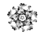 fractals greyscale flowers