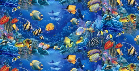 FISH OF THE SEA - colorful, fish, sea