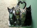Four Buddies