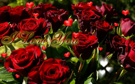 VALENTINE ROSES - valentine, symbol, roses, happy, gift, red, lovers, love