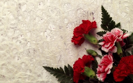 Carnation Decor - photography, widescreen, creation, valentines day, red, flower, valentine, birthday, with love, self made, love, valentines, happy birthday to me, mothers day, wds, happy birthday, own creativity, decor, carnation