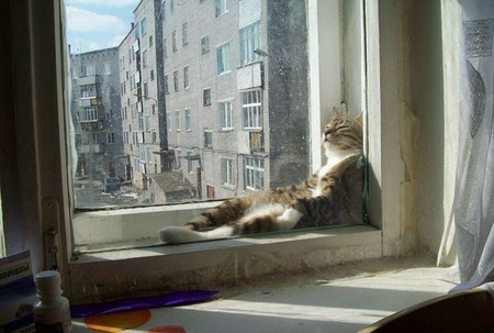 Cozy Cat! - windows, relaxed, sunlight, cats, animals