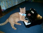 Virtuoso Kitty