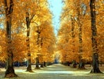 beautiful_fall