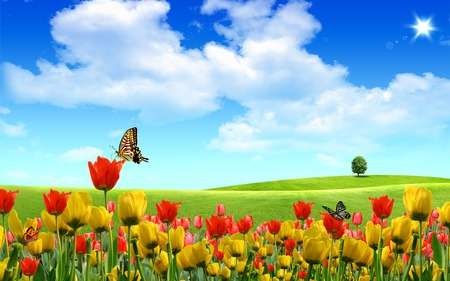 Beautiful Field - fields, grass, tree, sun, tulip, landscape, sunny, flowers, butterfly, blue, sky, colors, tulips, butterflys, summer, nature, beautiful, spring, clouds, field, green