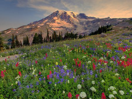 colorful meadow - flowers, meadow, wild