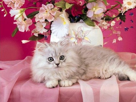 Cat on pink - kitten, cat, cute, flower