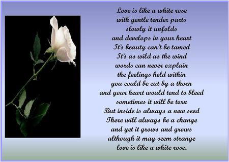 Love Is Like A White Rose Collages Abstract