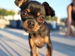 Camera Curious Dog