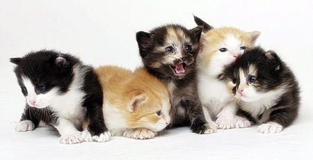 Five baby kittens - adorable, cuteness, cats, animals