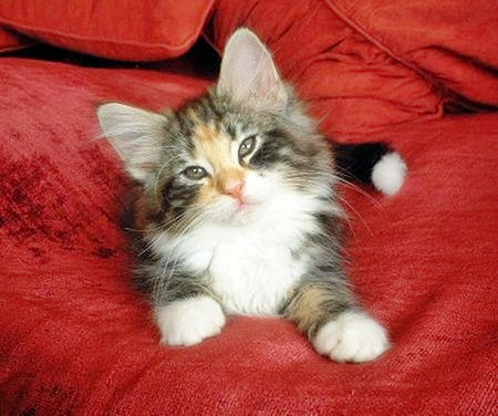 just like my kitty - adorable, cuteness, cats, animals