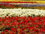 Floral Display, Moscow
