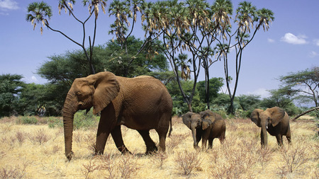 Elephants Family - big, animals, gigants, elephants, family, wild