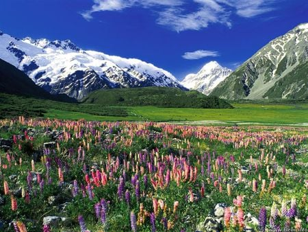 Spring Meadow New Zealand Flowers Nature Background Wallpapers