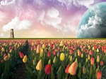 Cool Tulips