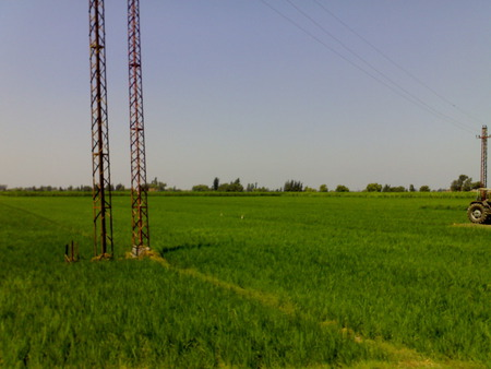 Egyptian countryside - egyptian, grass, contryside