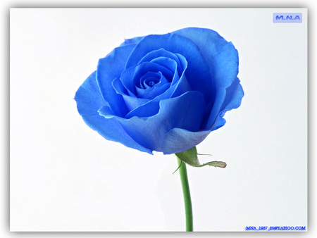 Blue Flower Flowers Nature Background Wallpapers On Desktop