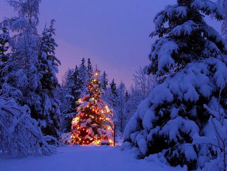 Christmas Night Tree - christmas, photography, cold, merry christmas, tree, one lit tree, fir tree, silent, winter, night tree, xmas, x-mas, holidays, night, feast