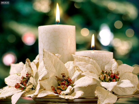 White flowers round the candles flowers nature background white flowers round the candles mightylinksfo