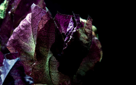 Leaf veins / Blattadern - dual monitor, photography, veins, dual screen, triptych, leaf