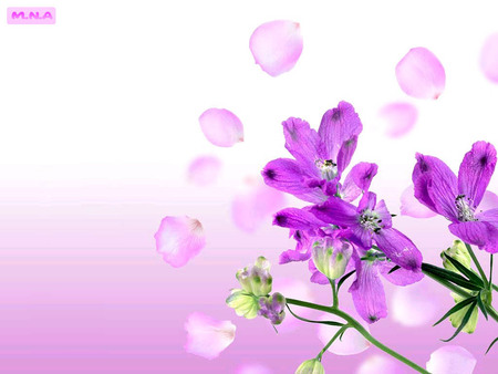 Violet Flowers - colorful flower, flowers, color, colors, colorful flowers, mna, nature, flower, rose, violet