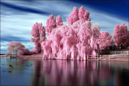 Color Me Pink - river, season, splash color, trees, pink, landscape