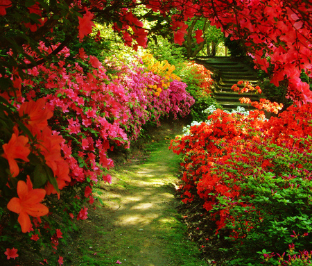 Beautiful Garden - garden, azalea, flowers, red, beutiful, nature