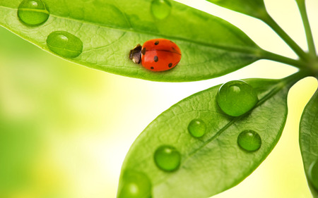Ladybird - raindrops, abstract, green, ladybird
