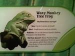 Wavy Monkey Tree Frog