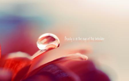 Beauty is in the Eye of the Beholder - beauty, drop, soft, pastel, wayer, macro, flower