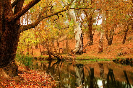 Beautiful Autumn - forests, rivers, trees, nature, autumn