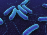 Coli Bacteria In Blue