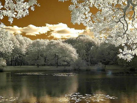 beautiful_nature - cool, white trees, beautiful, nature, lake
