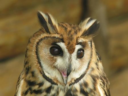 CUTE OWL - owl, cute