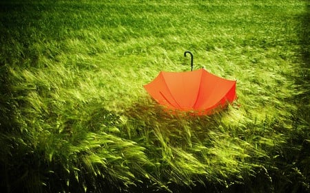 So Beautiful - beauty, lovely, sweet, pretty, landscape, umbrella, green, abstract, beautiful, field, nature, peaceful, nice, orange, romance, grass, alone, colors, romantic, photography, splendor, wheat