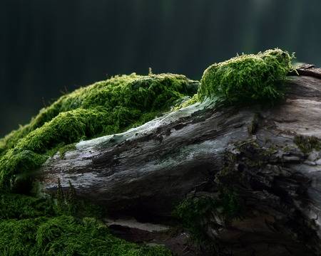 Algae on the trunk of a tree - forest, silence, rebirth, small, algae, tree, nice, deep, nature