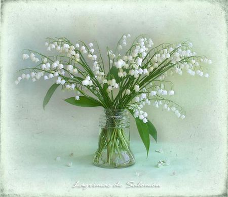 Still life - flowers, snowdrops, fantasy, white, snow drops, nature, flower