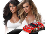 Bud Babes-Racecar
