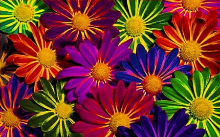 Colorful flowers flowers nature background wallpapers on desktop colorful flowers red colorful lovely colors beautiful daisies nice mightylinksfo