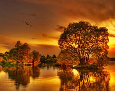 sunset - sunset, waterscape, autumn sunset, laks, water, tree, nature, landscape