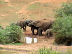 Elephants at the Addo Waterhole.