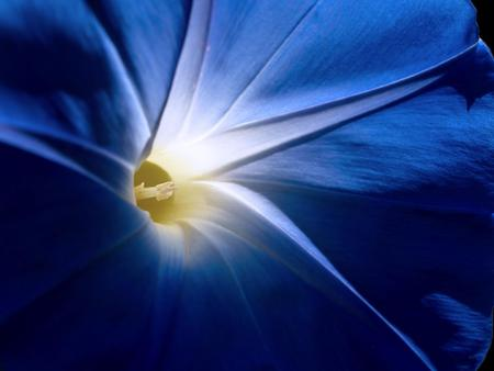 blue morning glory wallpaper for pc 1600x1200.jpg - flower, morningglory, upclose, blue