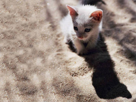 really cute!!! - beach, cat