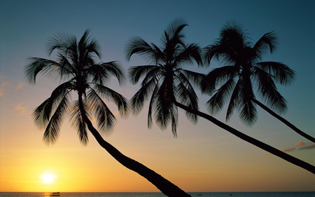 Beautiful Palm Trees - sun, sunset, trees, sky, palms, paradise, nature, sunrise, tropical, palm tree