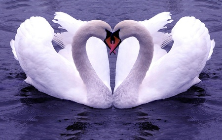 Love Sign / Liebeszeichen - valentines, valentines day, widescreen, its so cool, sign, wds, valentine, swan, i love you, birthday, love, heart, mothers day